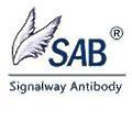Signalway Antibody logo